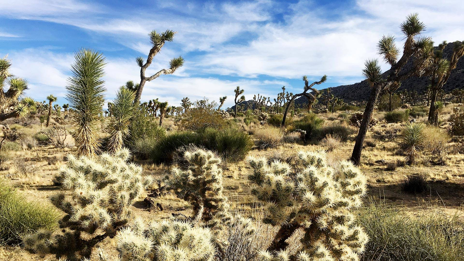 Joshua Tree National Park is one of the areas that will benefit from newly passed legislation expanding protected wilderness across the country.  Mojave Desert Land Trust Headquarters