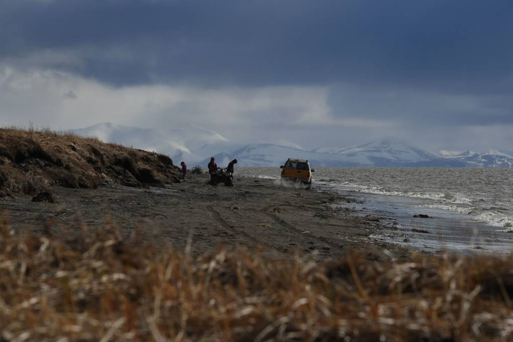 Releasing Herds of Animals Into the Arctic Could Help Fight Climate Change, Study Finds | KQED