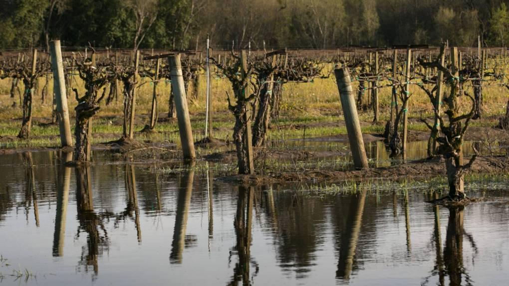 Chardonnay grapevines in the Russian River Valley flood on March 12, 2018, near Sebastopol, California.