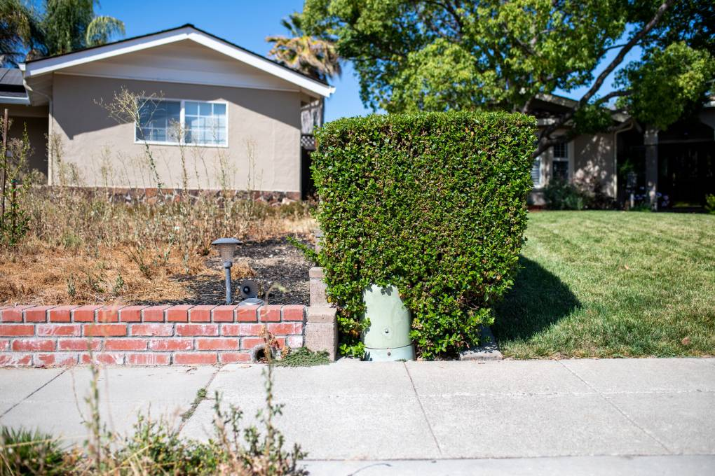A yard on the left has let their grass go dry, while a house next door has green grass in the Cambrian neighborhood located in West San Jose on July 21, 2021. Water restrictions are in place in San Jose which restrict the length of watering and limits the timing. Beth LaBerge/KQED