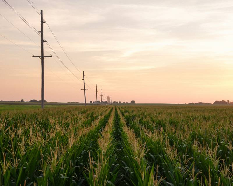 A large hazy sky spreads out over rows of corn. A row of electrical poles on the left side of the cornfield fades into the distance.