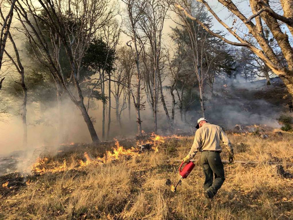 A firefighter lights a prescribed burn in Humboldt County to reduce the underbrush without killing trees.