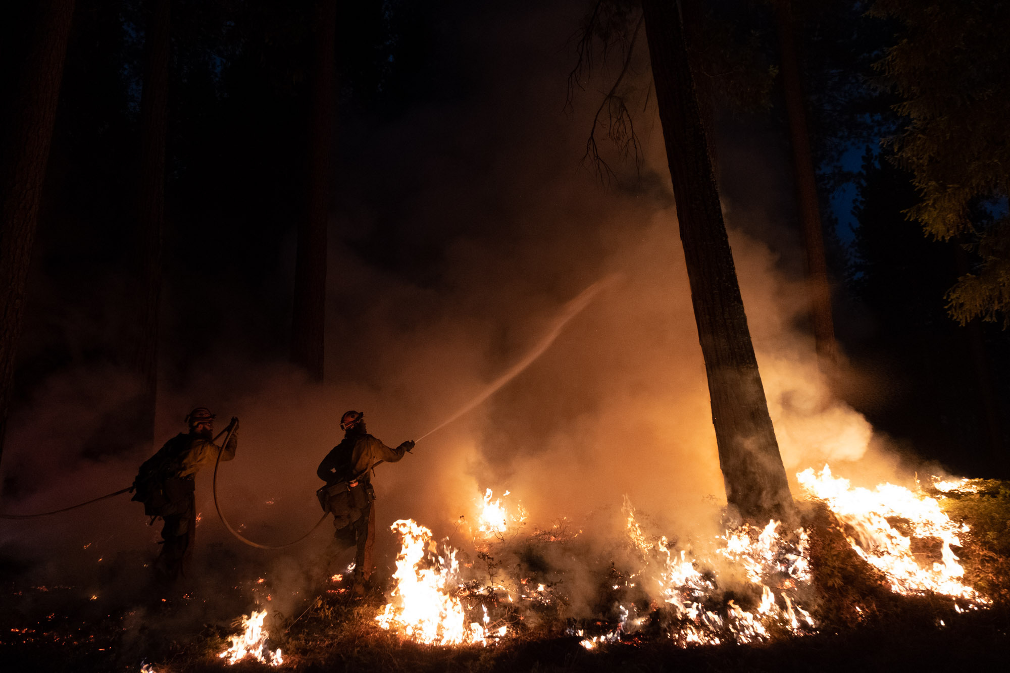 Fire crews manage a back fire while fighting the Caldor Fire.