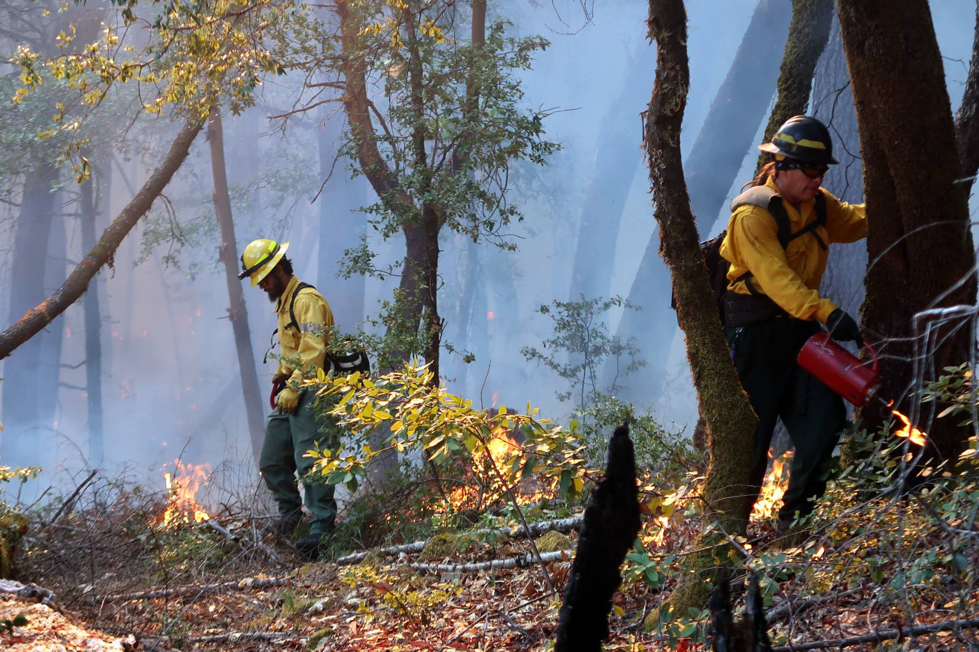 A multiagency prescribed fire training burn in 2019 in Six Rivers National Forest. Prescribed Fire Training Exchange