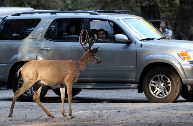 Eating Roadkill Is Illegal in California. But That May Change