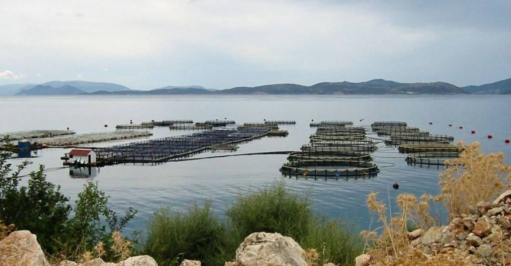 Aquaculture in western Greece.
