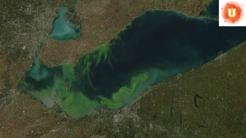 how fertilizers pollute water