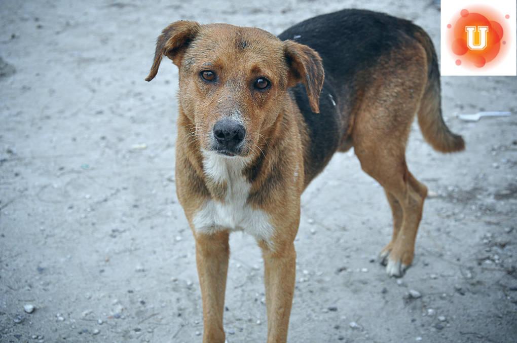 2477e538c374 Do No-Kill Shelters Really Benefit Animals? | Youth Participation ...