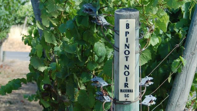 Napa Wineries Face Global Warming