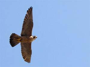 Clara soars over San Jose