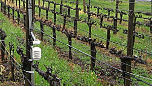 Reporter's Notes: High Tech in the Vineyards