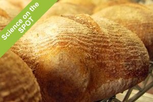 Science on the SPOT: Secrets of Sourdough