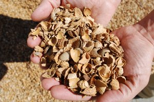 How Green is Biomass Energy?