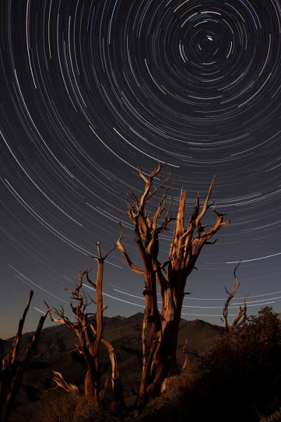 Bristlecone Pine Star Circle