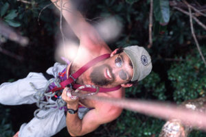 Brian Fisher collecting ants in the Madagascar canopy