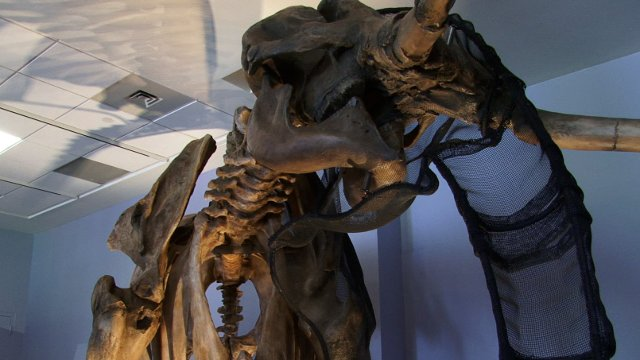 Science on the SPOT: Lupe the Mammoth Comes to Life