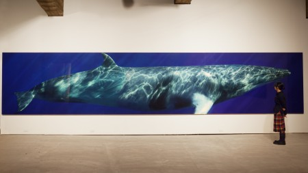 A visitor at Tokyo's Tamada Museum views Bryant Austin's life-sized print of a Minke Whale