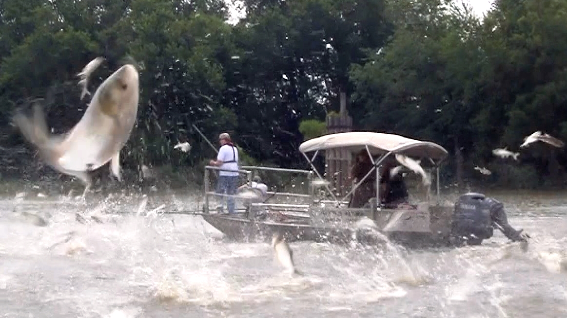 asian carp threat jpg 853x1280