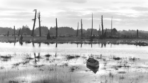 black and white image of dead upright trees and water