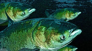 "Asian Carp, an ""Alien"" Threat to Lake Erie"