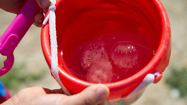bucket of jellies