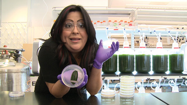 Emma Valdez, a Sapphire Energy technician, holds a petri dish with 1 million algae cells. Algae is grown and scaled up to 20-liter containers in about one week.