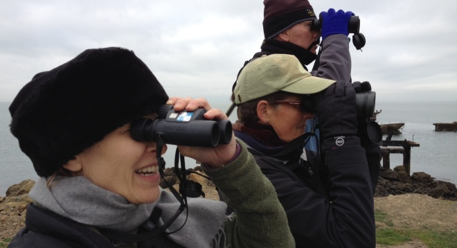 Audubon bird count volunteers