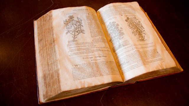 The 1633 edition of John Gerard's Herball (Photo: Todd Vachon/WHYY)