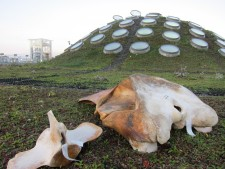 Whale skull on Academy's rooftop