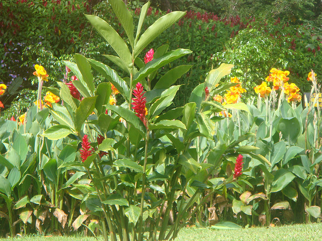Flowers and Greenery in Costa Rica
