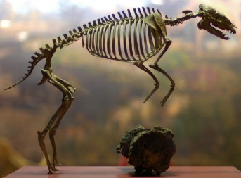 Hyracotherium, ancestral horse