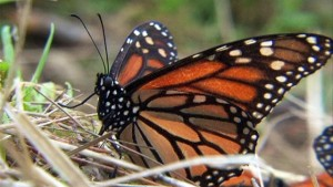 Science on the SPOT: Monarch Meetup