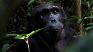 Field Notes:  Oakland Zoo in Uganda