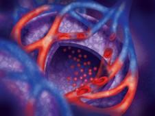 Alveoli by Leigh Anne Carter