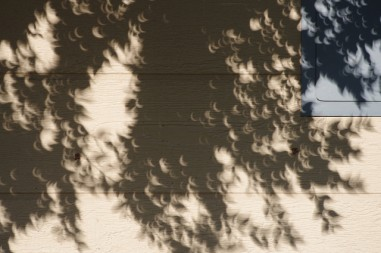 eclipse through leaves