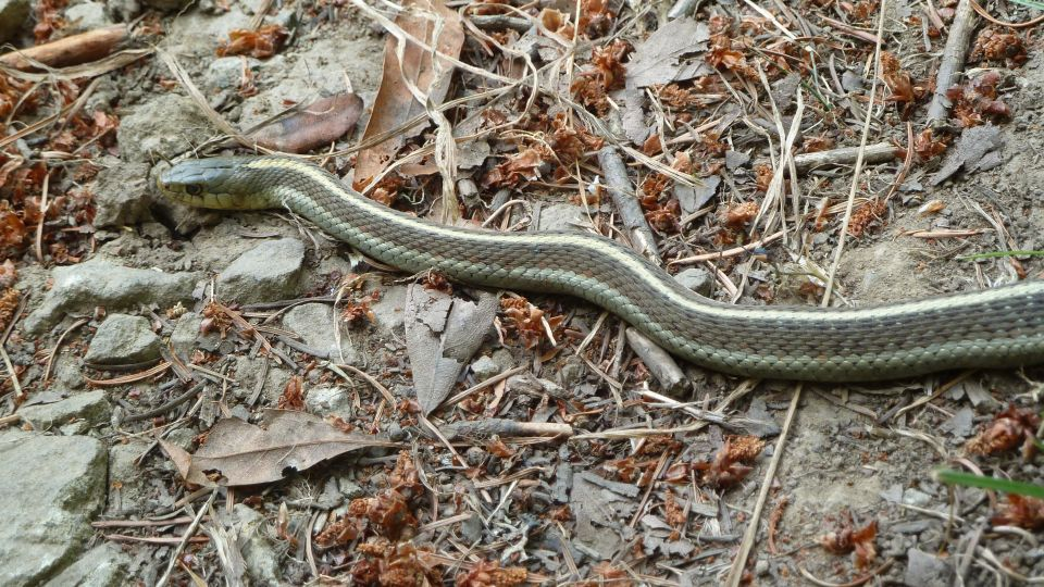 willow creek snake