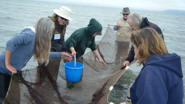 Seine net sampling of near shore animals at Crown Beach