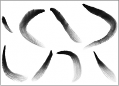 examples of individual brush strokes