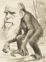 "This satirical cartoon depicting Charles Darwin as an ape, published in 1871, following the publication of Darwin's ""The Descent of Man,"" typified reactions of those who rejected Darwin's contention that humans and apes shared common ancestry."