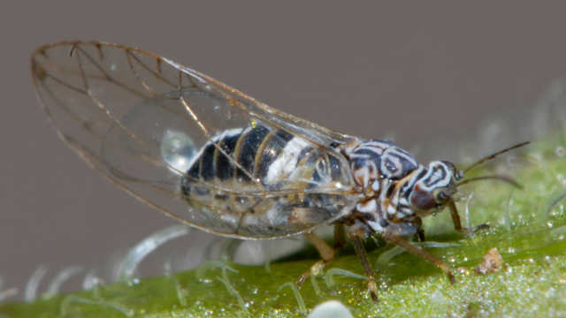 Some Bugs Like it Hot: Climate Change and Agricultural Pests