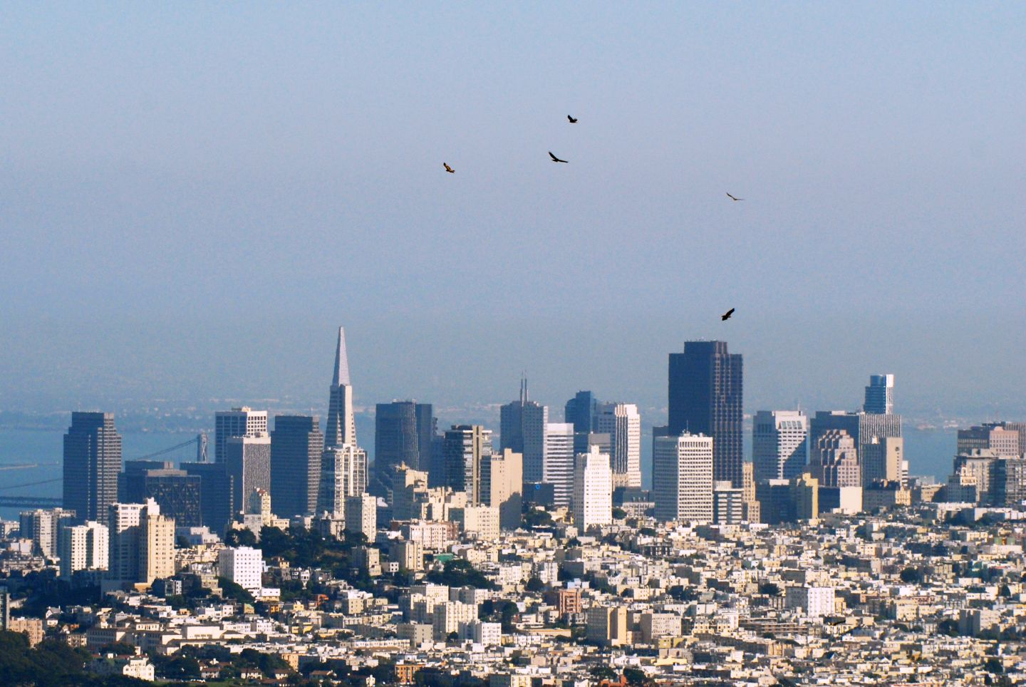 """A small """"kettle"""" of raptors rises on thermals near San Francisco.  Photo by Jessica Weinberg, courtesy of GGRO"""