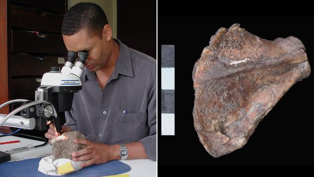 Zeray Alemseged preparing Selam fossil