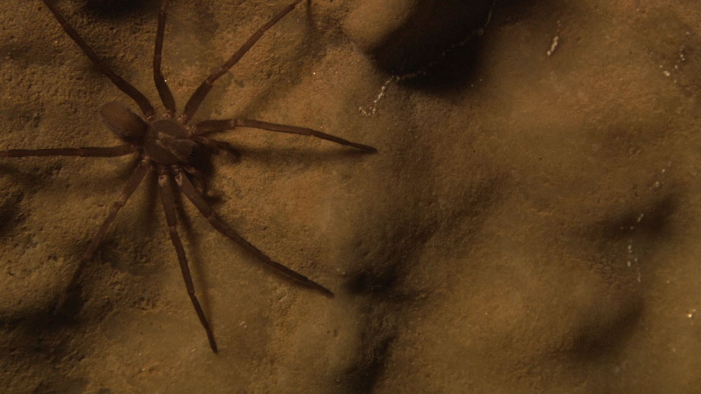 Science on the SPOT: Shadows and Spiders-- A Secret Cave in California