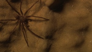 Shadows and Spiders-- A Secret Cave in California: Science on the SPOT
