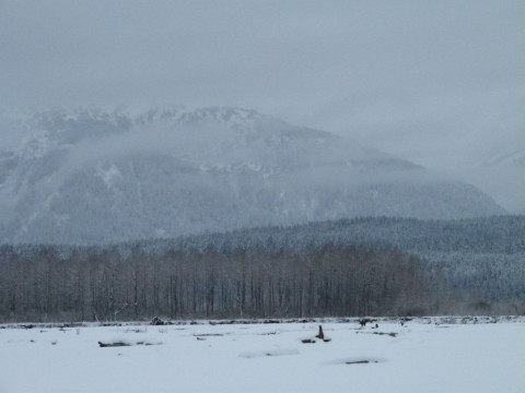 Chilkat Valley, Alaska