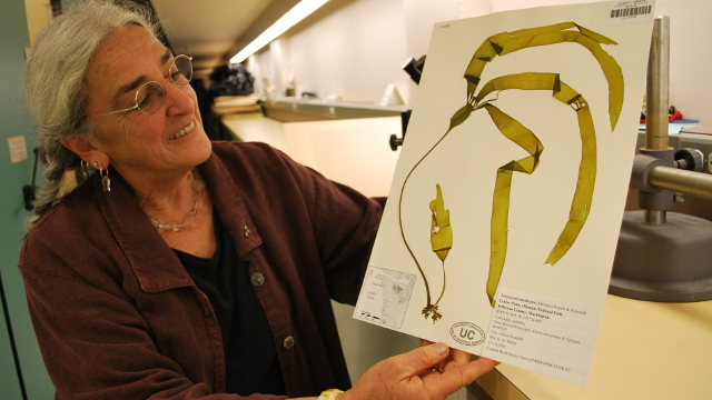 Science on the SPOT: Preserving the Forest of the Sea