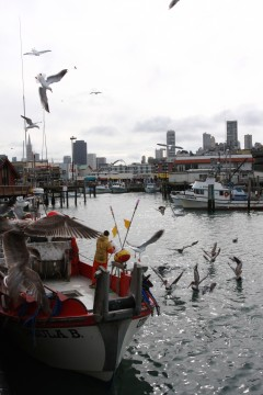 Gulls swarm as the Ursula B offloads six tons of herring near Fisherman's Wharf. (Photo: Shannon Service)