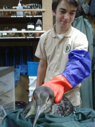 Trevor helped rescue the injured common loon from the beach.