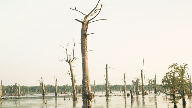 Richard Misrach's Cancer Alley: Documenting the Poisoning of America's Wetland