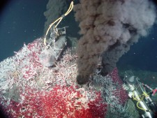 A bed of tube worms cover the base of the black smoker in the Main Endeavour Vent Field, NE Pacific. Courtesy NOAA PMEL EOI